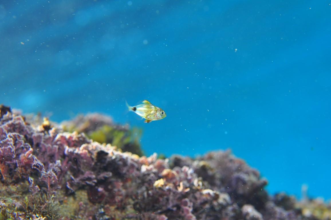 Visit gu xols 3 zone marine de bioconnaissance - Sant feliu de guixols office du tourisme ...